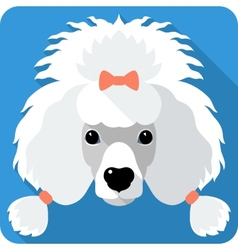 Dog Poodle icon flat design vector
