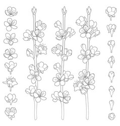 Set of images with blossoming spring branches vector