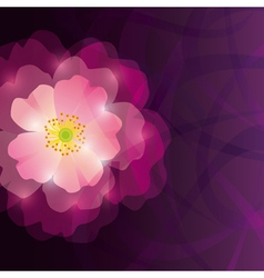 Abstract greeting or invitation card with purple vector image vector image