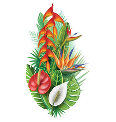 Arrangement from tropical plants vector