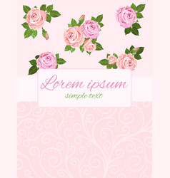 beige and pink roses on the pink background vector image