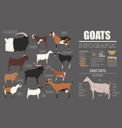 goat breeds infographic template animal farming vector image