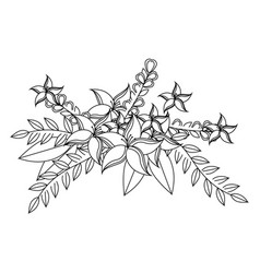monochrome contour with lily flowers crown floral vector image