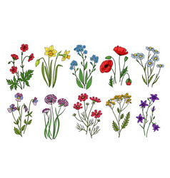 Wild flowers meadow plants monkshood thistle vector