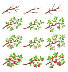 Apple tree branches vector image vector image