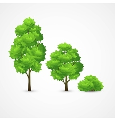 A set different trees vector