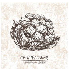 Digital cauliflower hand drawn vector