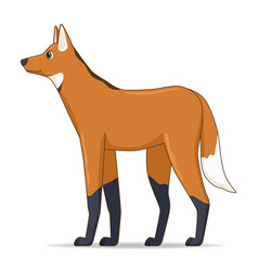 Maned wolf animal standing on a white background vector