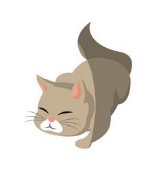 cat animal pet adorable shadow vector image