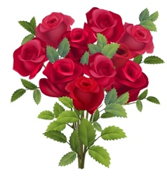 Realistic bunch of red roses vector image vector image