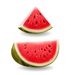 Watermelon realistic icon vector