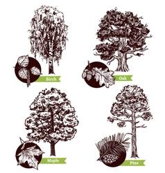 Sketch Tree Leaves Design Concept vector image vector image