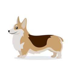 cute corgi icon small playful dog with short paws vector image