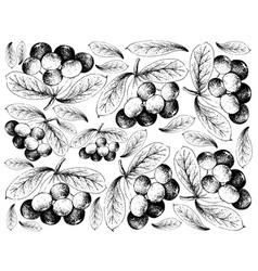 Hand drawn background of fresh acai berries vector