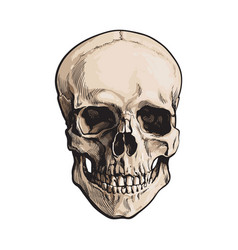 hand drawn human skull anatomical model sketch vector image