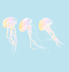 hand drawn jellyfish sea vector image