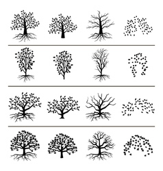 Trees with roots foliage and fallen leaves vector