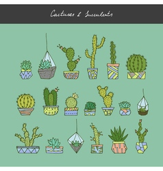 Cactuses succulents set vector image