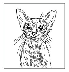 cat drawing on white background vector image