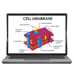 Cell membrane structure on laptop screen vector