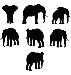 elephant collection silhouette vector image