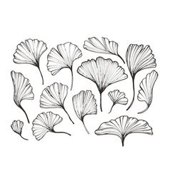 florals line art sketch foliage set vector image
