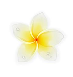 Flower frangipani vector