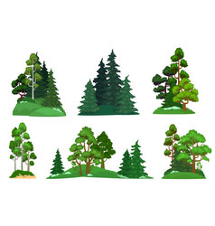 forest trees green fir tree forests pine vector image