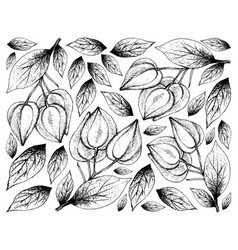 hand drawn background of belimbing merah fruits vector image