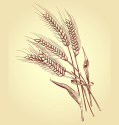 Hand drawn ears of wheat with grains bakery vector