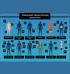 Human body infographics vector