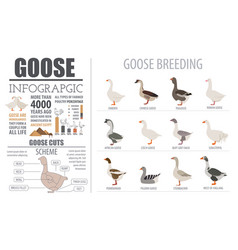 Poultry farming infographic template goose vector
