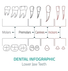 Dental infographic vector image vector image