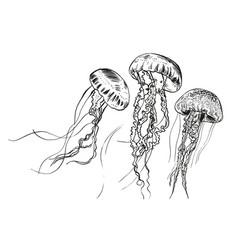 hand drawn jellyfish sea vector image