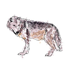 Colored hand drawing a wolf vector image