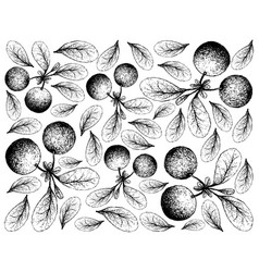 Hand drawn background of fresh bog bilberries vector