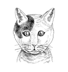 hand drawn portrait funny cat baby vector image