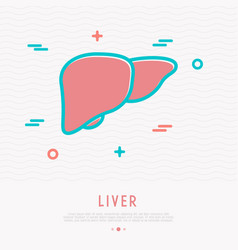 liver thin line icon vector image