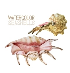Watercolor seashells collection vector