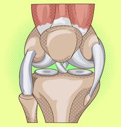 Anatomy structure knee joint pop art vector