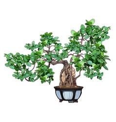 Bonsai tree in a pot vector