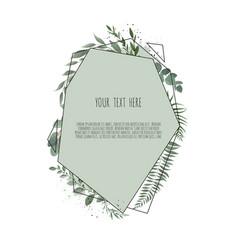 eucalyptus silver dollar green branches leaves vector image