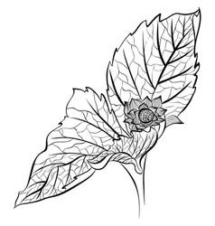 Flower leaves line art vector