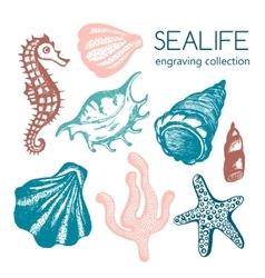 Sea collection with seashells starfish vector image