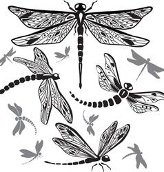 set of decorative dragonflies vector image vector image