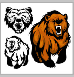 Color of bear grizzly vector