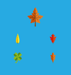 Flat icon foliage set of maple leafage alder and vector