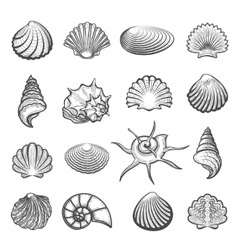 Hand drawn sea shell set vector