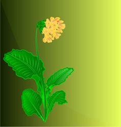 Primrose spring flower green background vector