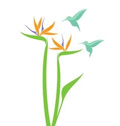 Strelitzia and hummingbird vector